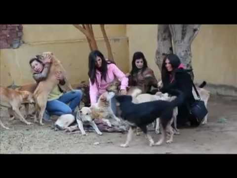 STOP Animal Abuse in Egypt (SAAEGY) -Cases from ESMA's Dogs Shelter