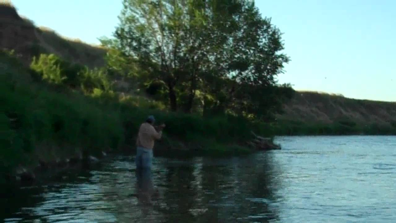 Bighorn river black caddis dry fly fishing www for Bighorn river fishing report
