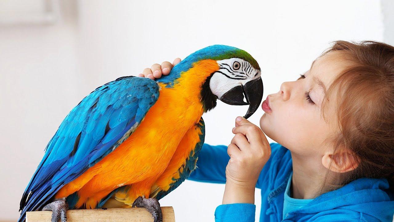 Bird Pet