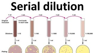 5 serial dilution