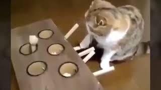 Khoảnh khắc hài hước của động vật #1
