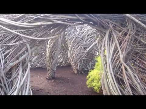 What Is It? Patrick Dougherty Exhibit