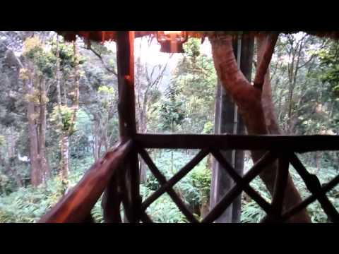 A walk around Carmelia Haven Tree House