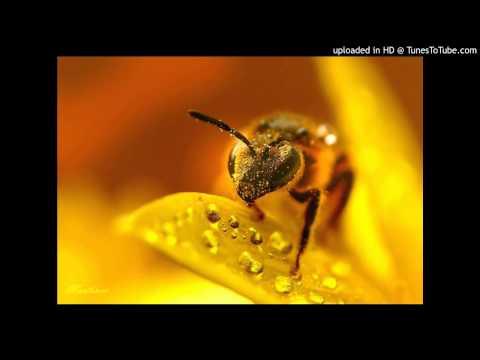 Anuragini - Ivan Megharoopan - Full Song video