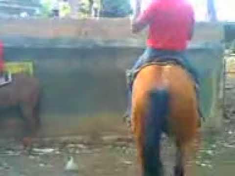 toros coleados rutinas de una extraordinaria yegua