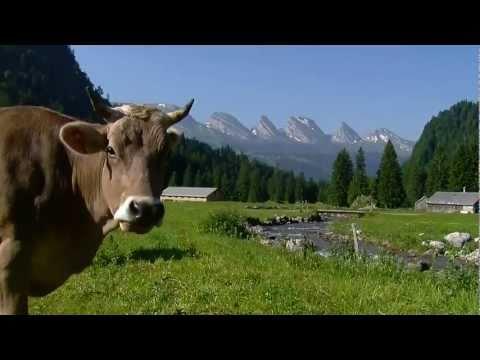 Switzerland Summer | HD