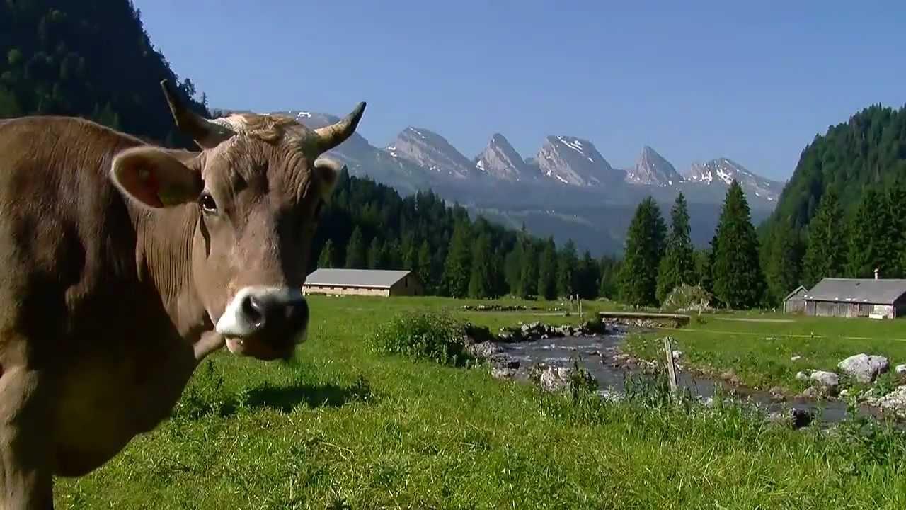 Y ya que llegan días en el que hablaremos de vacaciones, vamos a relajarnos viajando a Suiza en pleno verano...¿Os la imaginábais con nieve?...pues su belleza estival.