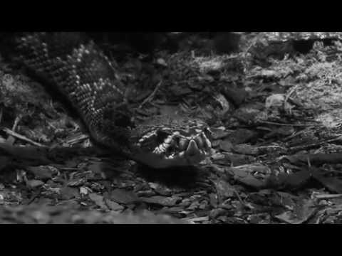 Proll Guns - Trinity (PROMOTION VIDEO)