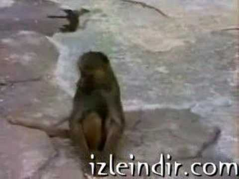 Monkey Scared Of Mirror --Must See-- Video