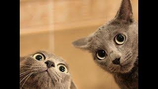 смешные коты и кошки 2017 приколы с котами и кошками 2017 приколы про кошек