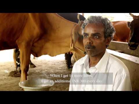 RFIS: Krishnan – Livestock farmer – Pudukkottai – Tamil Nadu