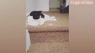 Funny Animals Videos Compilation! Cute Cats & Dogs   Try Not To Laugh #6
