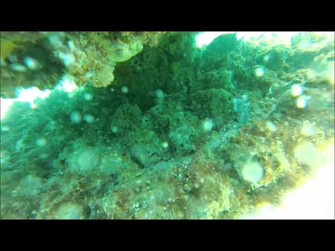 Pensacola Reef 14 May 13