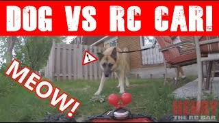 """DOG CONFRONTS RC CAR """"HENRY THE RC CAR""""! (EPISODE #94)"""