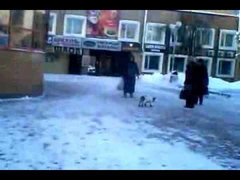 Дура, с собакой, ржака, смех, умора, юмор, ппц