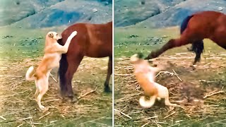 12 Minutes of Incredible Animal Moments