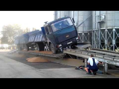 Truck unloads grains on the ramp (грузовик МАЗ высыпает зерна на рампе)