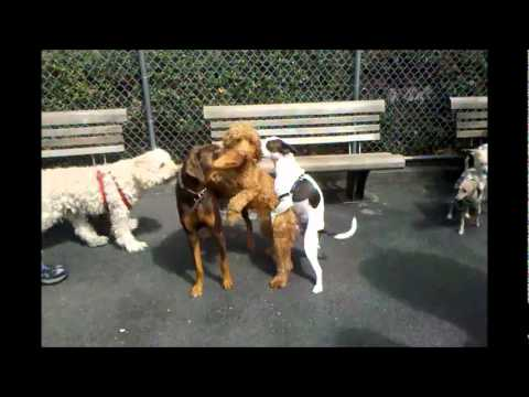 The Gay Dog Run video