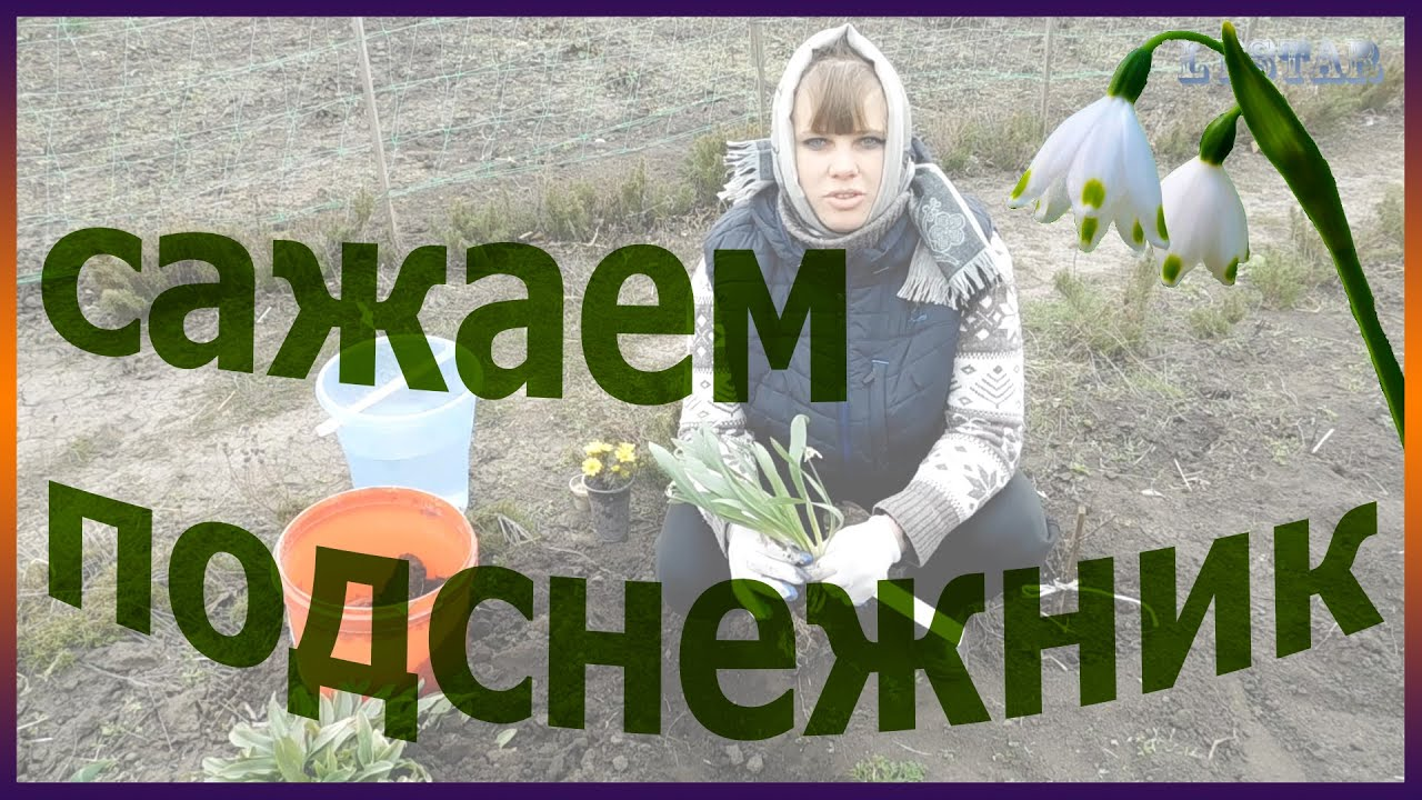 Как сажать семена подснежников 55