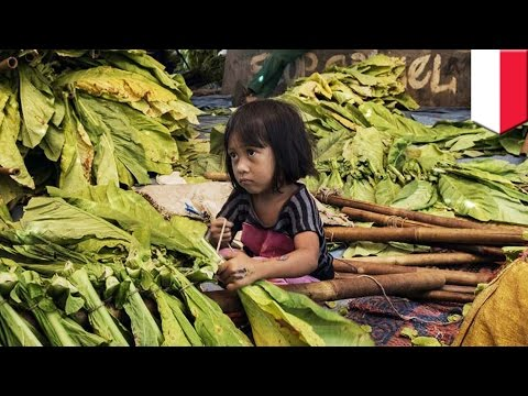 Child labor: Human Rights Watch exposes child labor at Indonesian tobacco farms - TomoNews