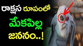 రాక్షస రూపంలో మేక జననం | Baby goat is born with Evil like features Viral in Argentina | Latest News