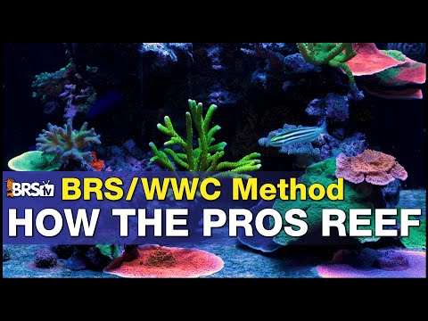 Ep:0 How the PRO's do it. A introduction into the BRS/WWC Hybrid method for reef tanks.