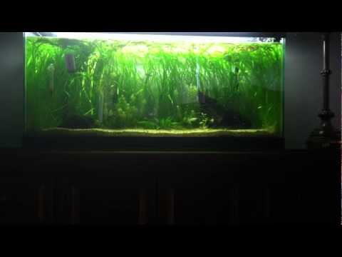 How To Reduce Nitrates In Your Aquarium Youtube