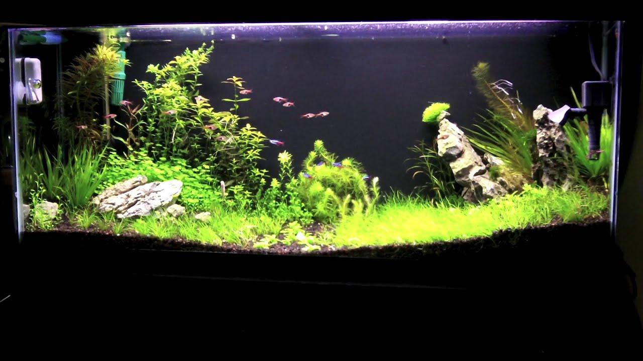 55 Gallon Planted Aquascape 35 Days Youtube