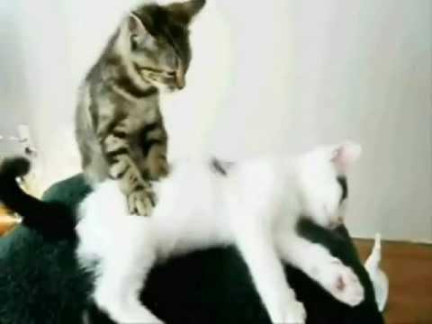 Happy Cat Youtube