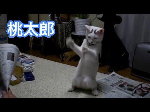 立って踊る猫