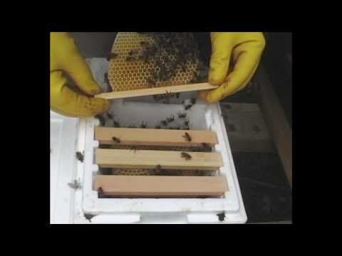 Myself conducted a short course in beekeeping covering most of the