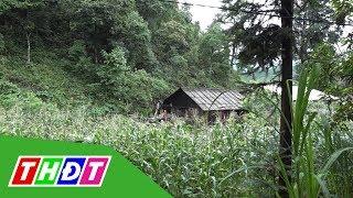 Sét đánh khiến 4 người thương vong tại Hà Giang | THDT