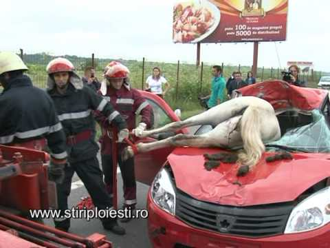 Accident incredibil pe DN 1 un cal a intrat intr-o masina
