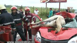 Accident incredibil pe DN 1 un cal a intrat intr-o masina