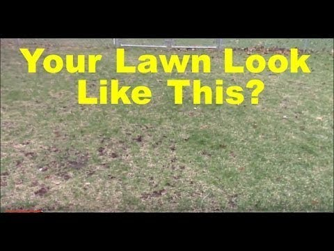 My Lawn Thinned Out Over Winter - Cool Season Lawn Tips