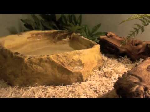 Ball Python Care:Part 1- Terrarium Set-up