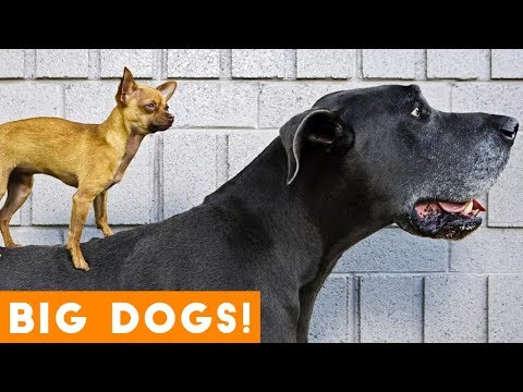 Ultimate Big Dog Compilation May 2018 | Funny Pet Videos