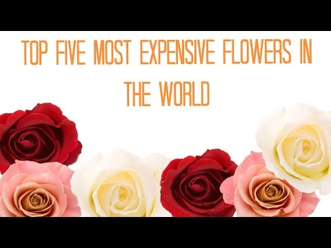 TOP FIVE MOST EXPENSIVE FLOWERS IN THE WORLD