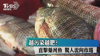 越污染越肥?直擊藥河魚 驚人流向市場