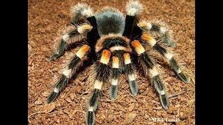 Cuộc chiến khốc liệt giữa Nhện độc và Nhện nhà   SPIDER