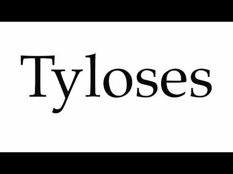 Header of Tyloses