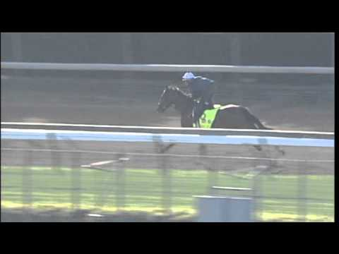 Normandy Invasion workout Churchill Downs 4.21