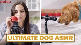 The Ultimate Dog ASMR // Presented by Petco