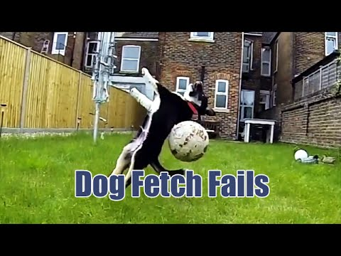 Thumbnail of video Dog Fetch Fails