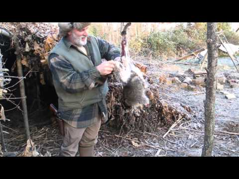 Skinning a Raccoon with Rope,Modern Trapping Part 32