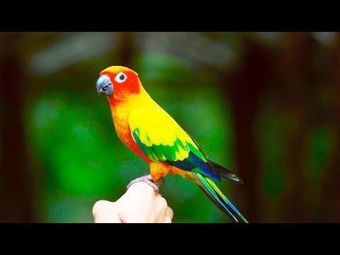 How to Train a Bird | Pet Bird
