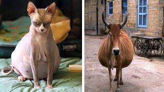 """How 24 Animals Look Before Giving Birth """" Interesting Video"""""""