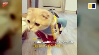 THE MASKMAN REVIEWS_2 : Sensational cat mutations! Funny costumes.