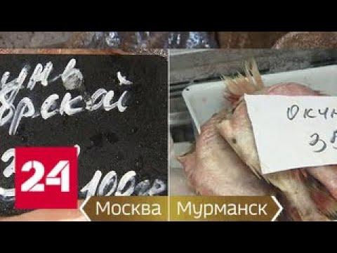 Вопрос о рыбе задал Путину не журналист - Россия 24