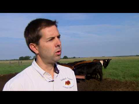 Supplementing Beef Cattle on Grass